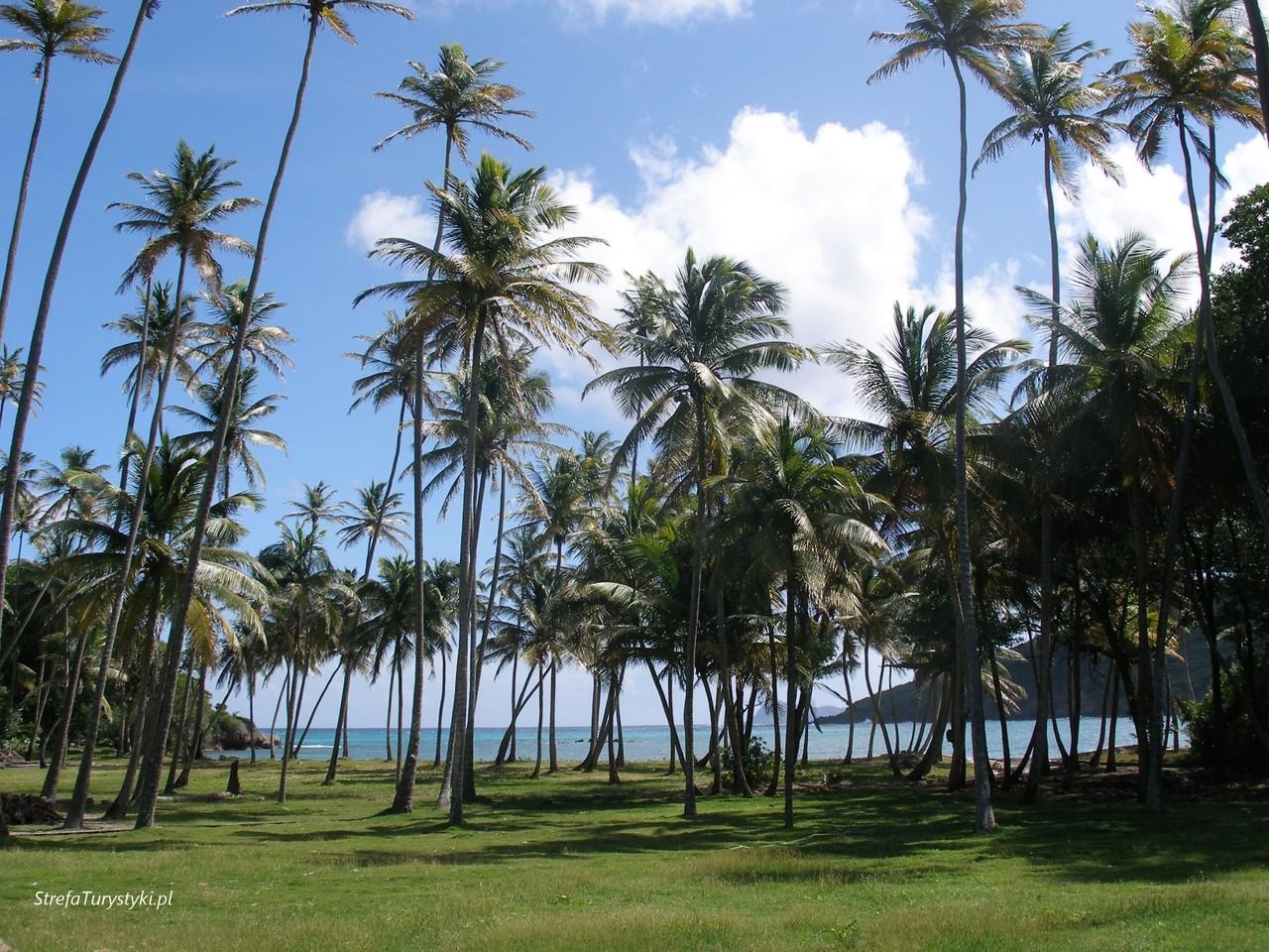 Palmy Karaiby